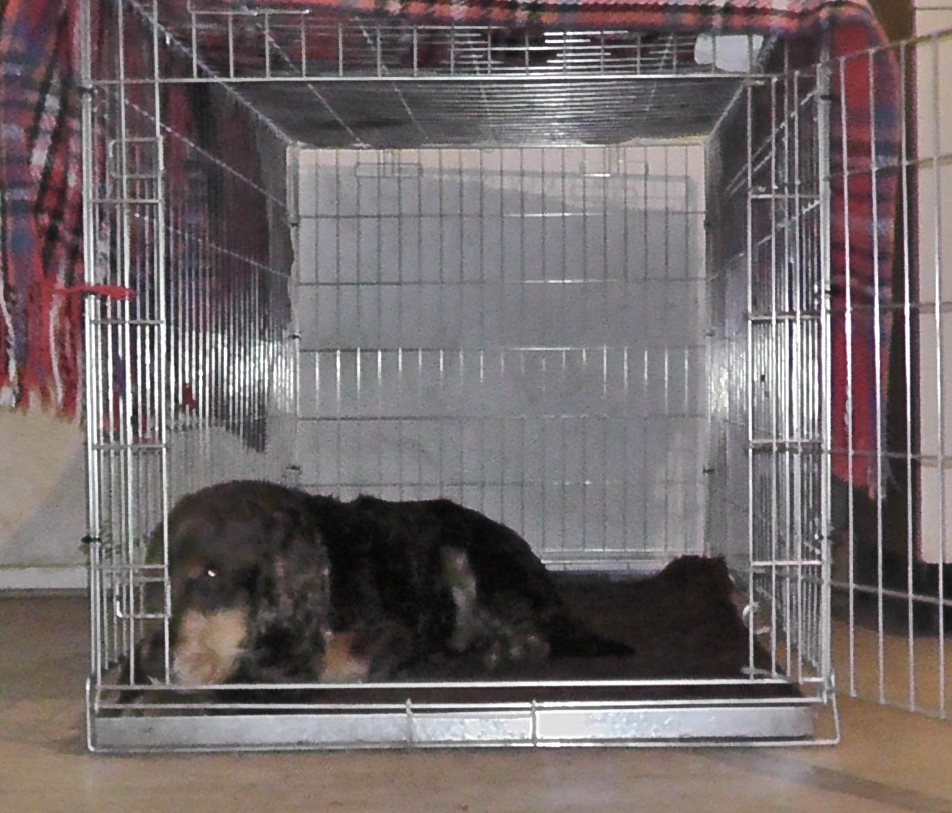 Die Hundebox - Welpenerziehung
