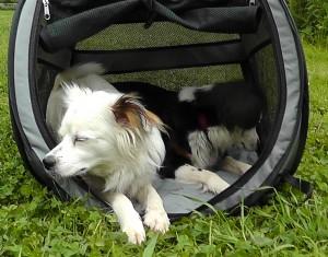 Aufgeklapptes Hundezelt