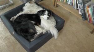 Hundebett aus Kunstleder