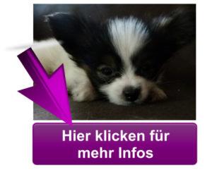 """Mehr Infos zum VideoBook """"Das total ANDERE Welpenbuch"""""""