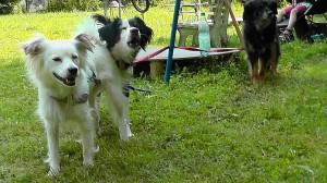 Meine perfekten Hunde