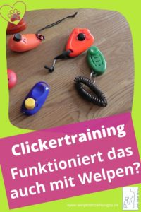 Clickertraining Welpe