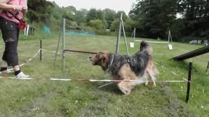 Fröhlicher Hund beim Training