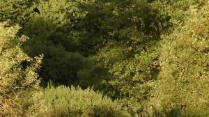 welpenerziehung Leinenführigkeiit - Die Baum-Methode