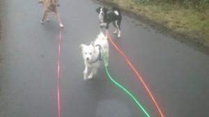 Schleppleinentraining mit mehreren Hunden