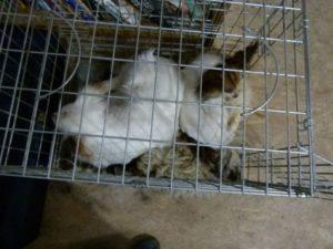 Meringa und Joy kuscheln in der Hundebox