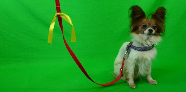 Aktion Gelber Hund
