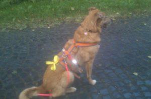 Queena trägt ein gelbes Band