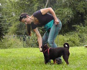 welpe will zu jedem hund - rueckorientierung