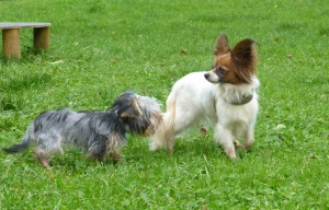 Minihunde in der Hundeschule