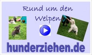 Webinar Sachkunde Welpe