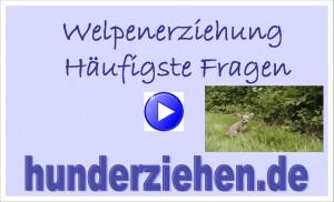 Webinar Welpenprobleme