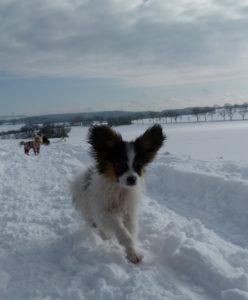 Welpenerziehung Cleo im Schnee