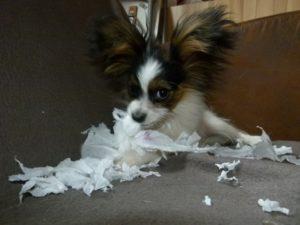 Cleo baut ein Puzzle