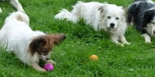suchen von Ostereiern macht Hunden Spass