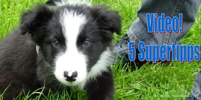 Fünf tolle Tipps zur Erziehung deines Hundewelpen