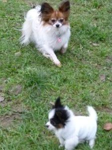 Cleo und Joy