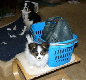 Cleo will einkaufen