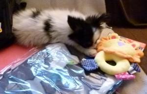Cleo mit neuem Spielzeug