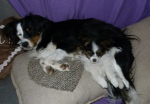 Cleo und Muffin auf dem Sofa