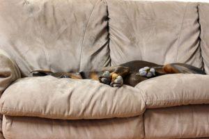 entspannt alleine hund
