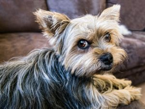 hund vom sofa