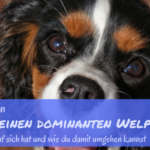 welpe ist dominant
