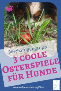 3 coole Osterspiele Hund