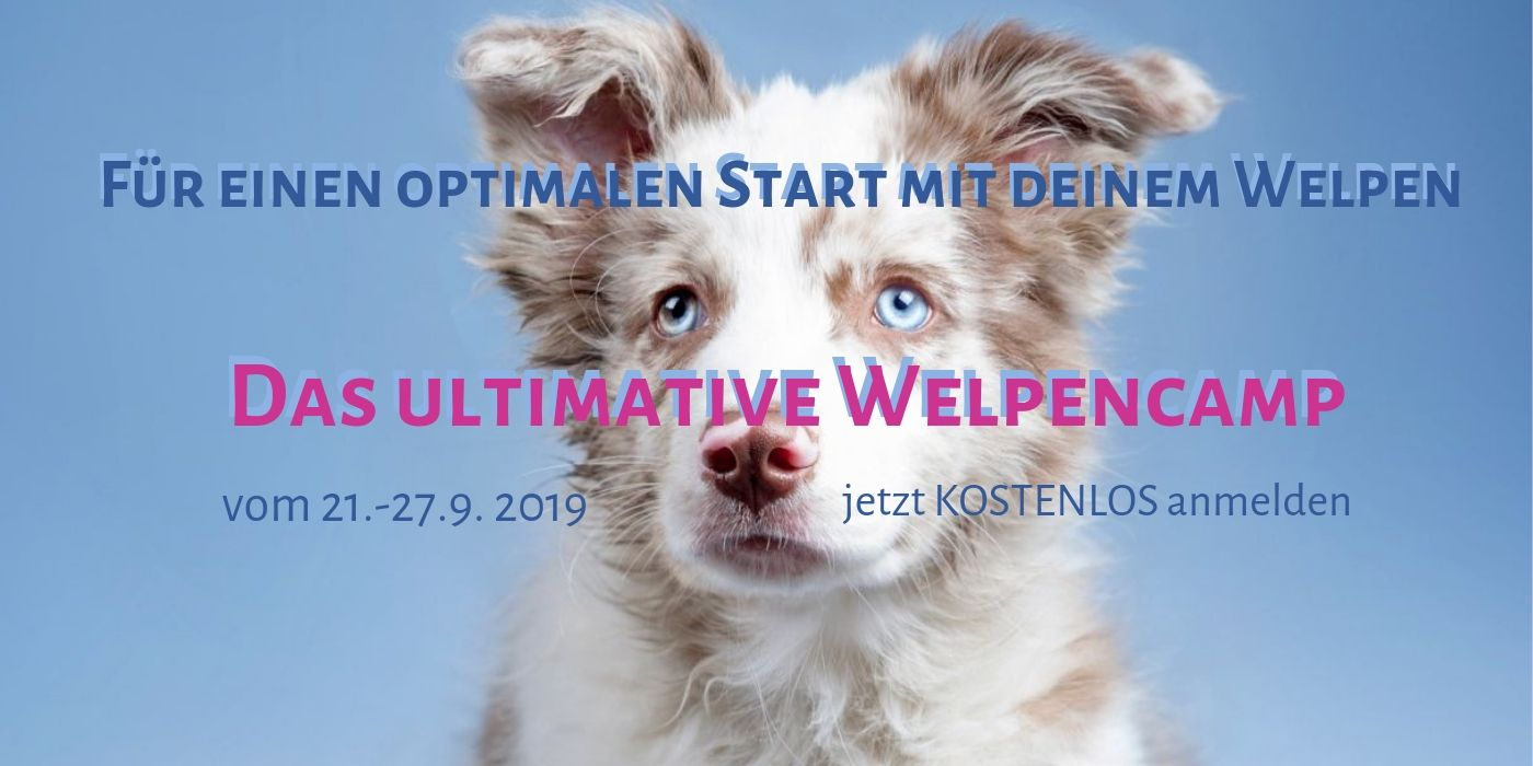 Welpenerziehung - Ultimative Welpencamp