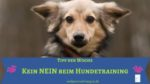 Kein nein beim Hundetraining