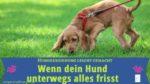 Hund frisst unterwegs alles