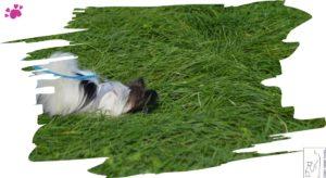 Leckerlisuche im Gras
