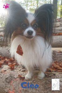 Meine Hunde - Cleo