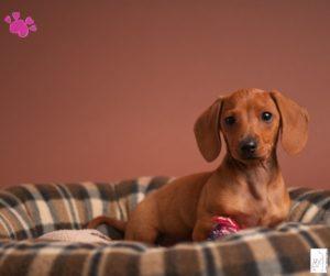Welpe bleibt brav im Hundebett